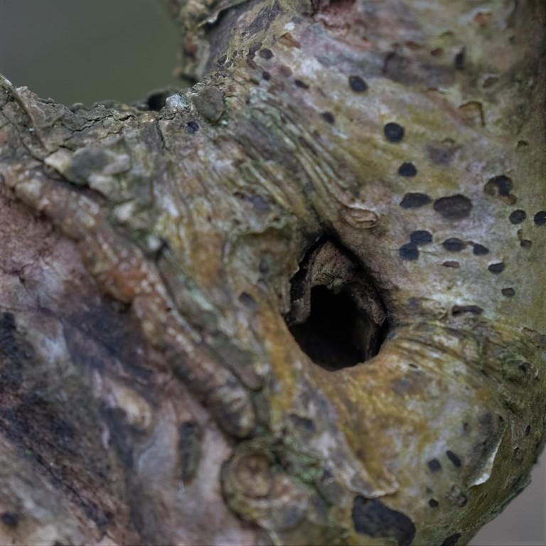 Loch in Baum