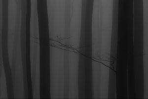 Winter -Wald – Nebel