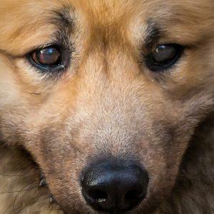 Wiesbadener Hunde